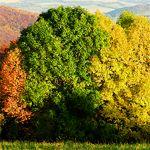 Jesenná trikolóra